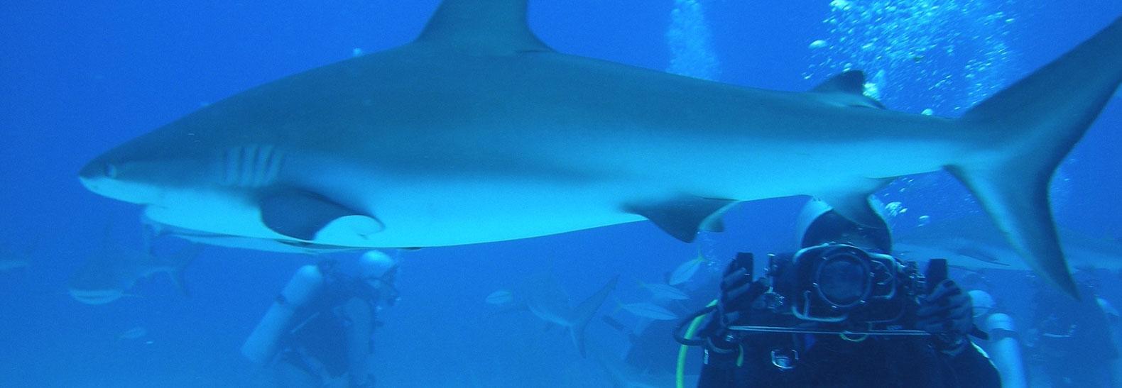L'arcipelago è un vero e proprio paradiso del diving